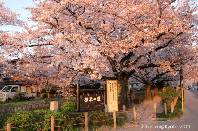 20110412_Kyoto-365_哲學之道_1.JPG