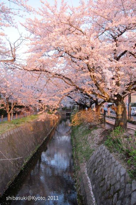 20110412_Kyoto-367_哲學之道_1.JPG