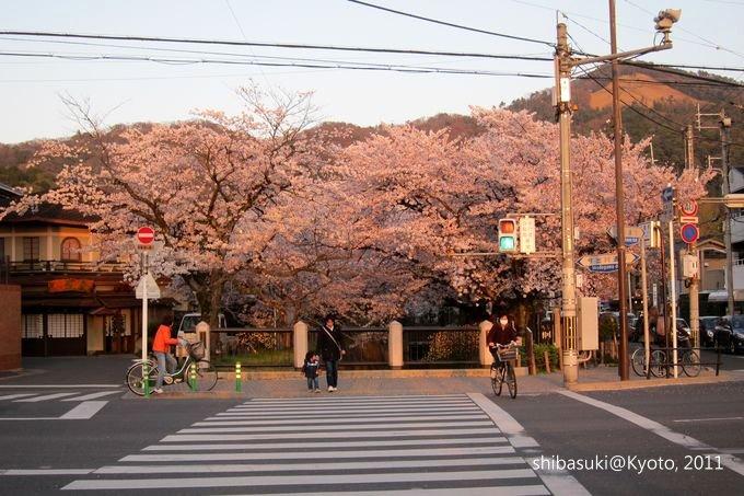 20110412_Kyoto-369_哲學之道_1.JPG
