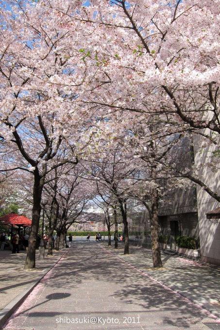 20110413_Kyoto-6_白川巽橋_1.JPG