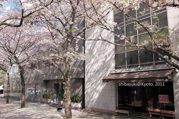 20110413_Kyoto-8_白川巽橋_1.JPG