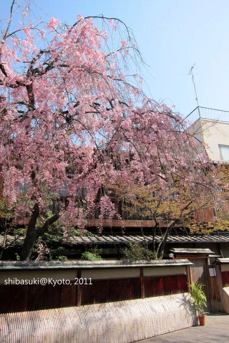 20110413_Kyoto-15_白川巽橋_1.JPG