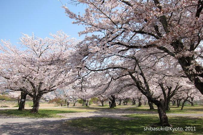 20110413_Kyoto-35_嵐山_1.JPG
