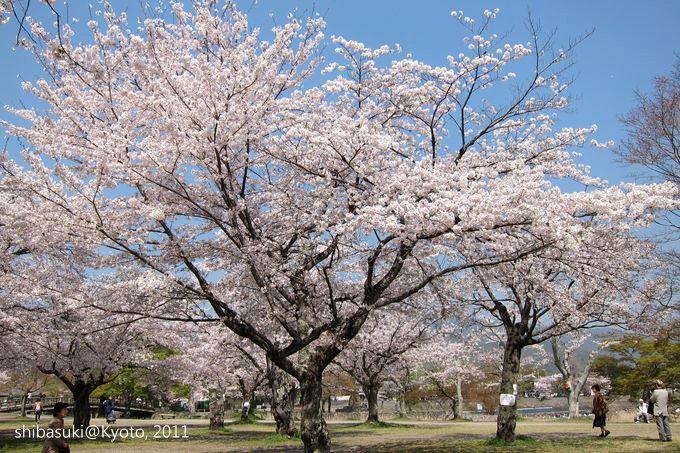 20110413_Kyoto-45_嵐山_1.JPG