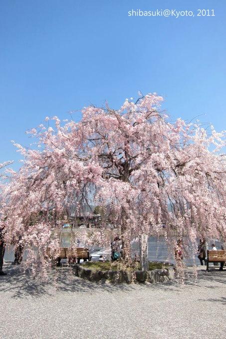 20110413_Kyoto-64_嵐山公園 中之島_1.JPG