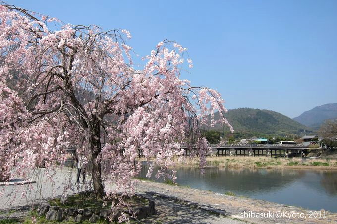 20110413_Kyoto-112_嵐山公園 中之島_1.JPG