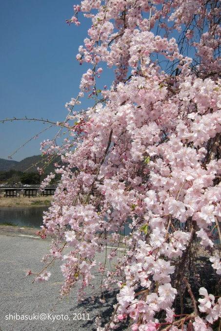 20110413_Kyoto-116_嵐山公園 中之島_1.JPG