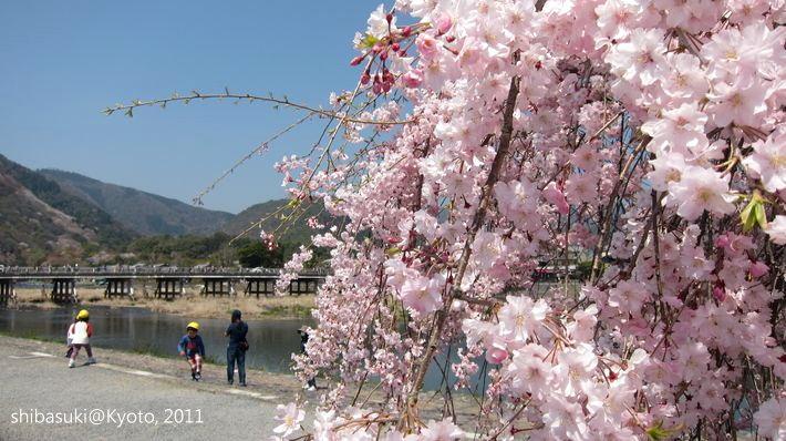 20110413_Kyoto-119_嵐山公園 中之島_1.JPG
