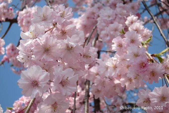 20110413_Kyoto-125_嵐山公園 中之島_1.JPG