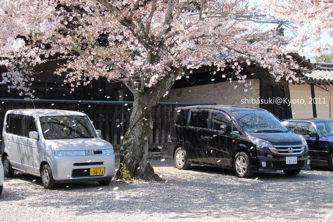 20110413_Kyoto-176_嵐山 天龍寺_1.JPG
