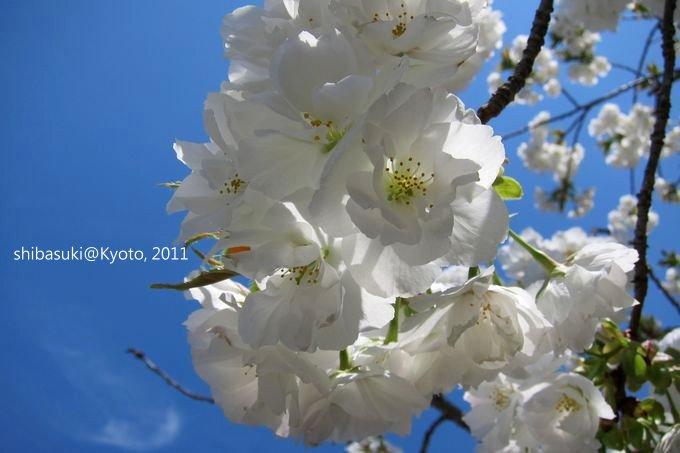 20110414_Kyoto-159_二條城_1.JPG