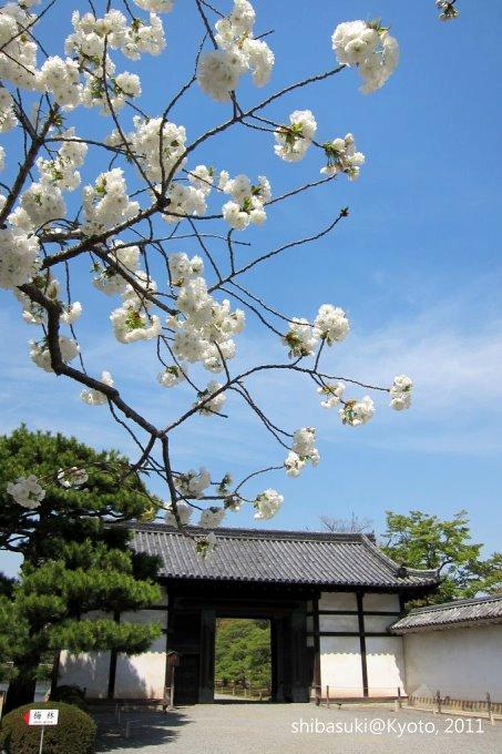 20110414_Kyoto-162_二條城_1.JPG