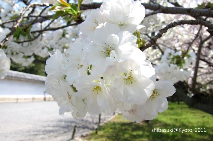 20110414_Kyoto-166_二條城_1.JPG
