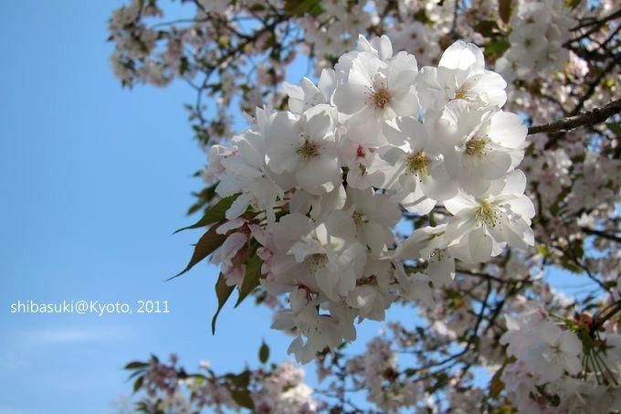 20110414_Kyoto-172_二條城_1.JPG
