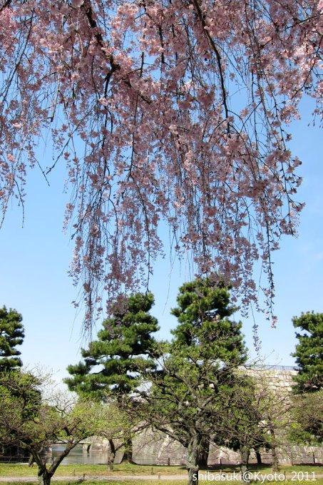 20110414_Kyoto-173_二條城_1.JPG
