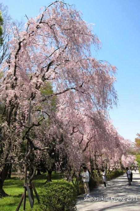 20110414_Kyoto-176_二條城_1.JPG