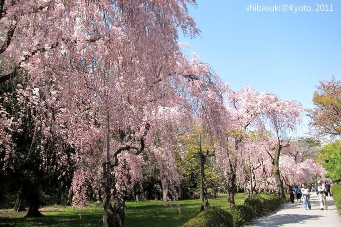 20110414_Kyoto-181_二條城_1.JPG
