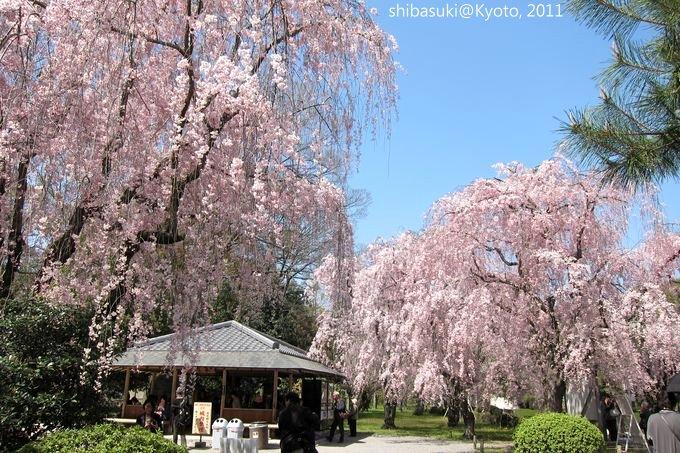 20110414_Kyoto-183_二條城_1.JPG