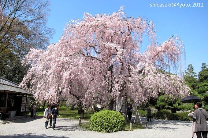 20110414_Kyoto-184_二條城_1.JPG
