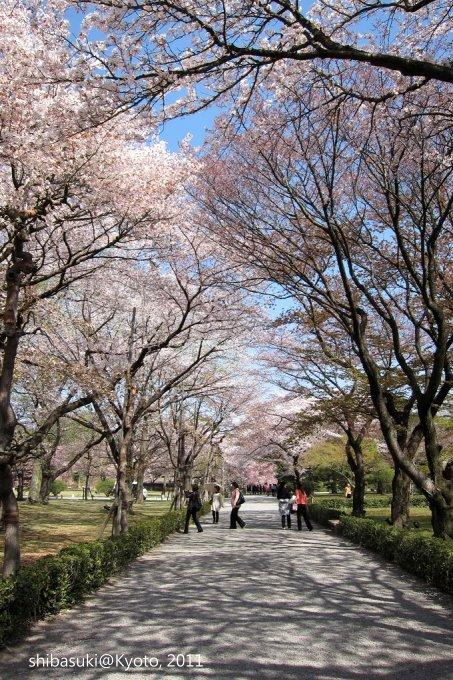 20110414_Kyoto-190_二條城_1.JPG