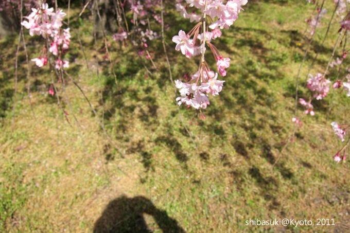 20110414_Kyoto-197_二條城_1.JPG