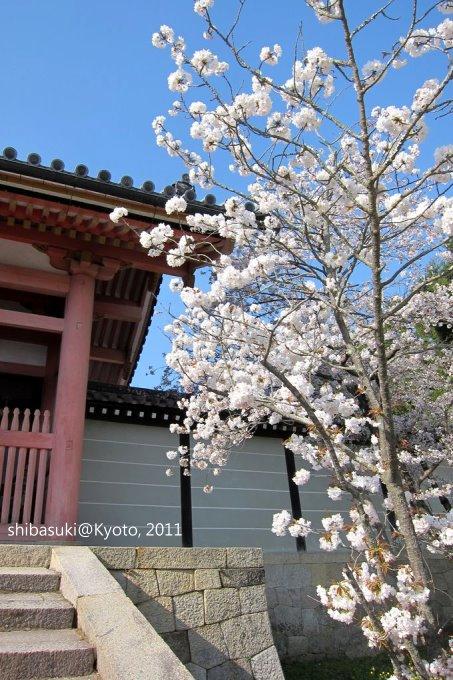 20110414_Kyoto-207_御室仁和寺_1.JPG