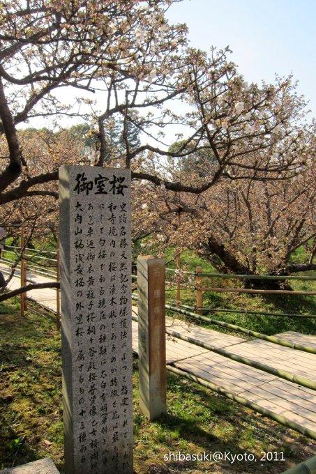 20110414_Kyoto-208_御室仁和寺_1.JPG