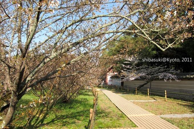 20110414_Kyoto-212_御室仁和寺_1.JPG