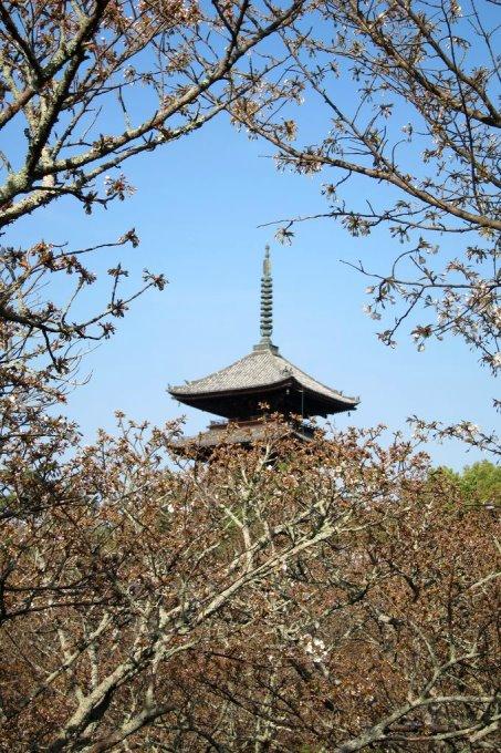 20110414_Kyoto-214_御室仁和寺_1.JPG