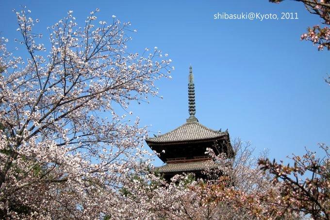 20110414_Kyoto-219_御室仁和寺_1.JPG