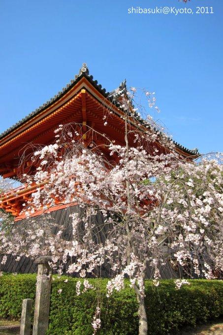 20110414_Kyoto-227_御室仁和寺_1.JPG