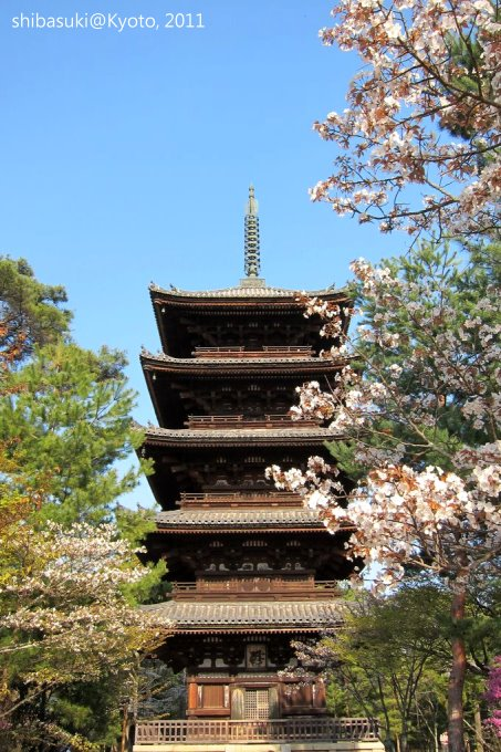 20110414_Kyoto-242_御室仁和寺_1.JPG
