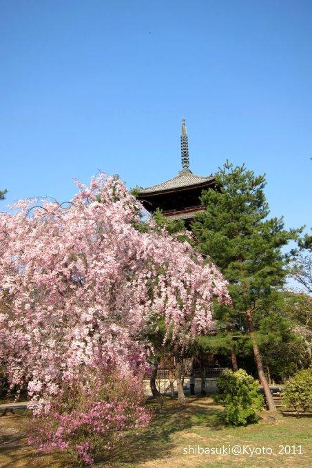 20110414_Kyoto-244_御室仁和寺_1.JPG