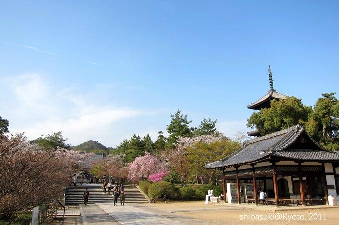 20110414_Kyoto-250_御室仁和寺_1.JPG