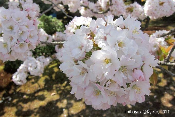 20110414_Kyoto-149_二條城_1.JPG