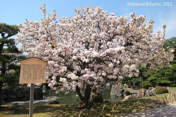 20110414_Kyoto-152_二條城_1.JPG