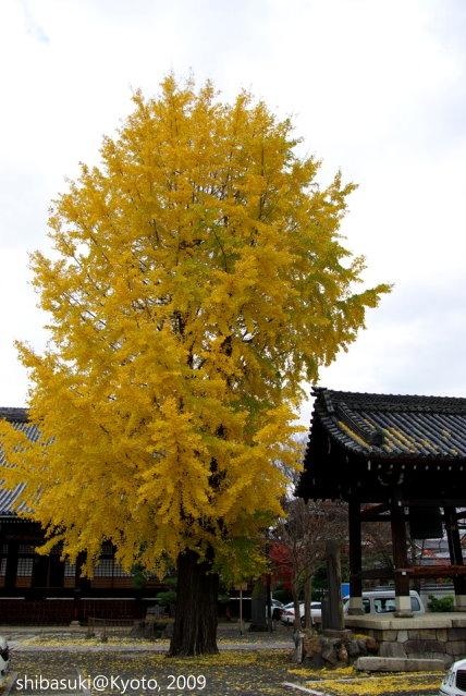 20091129_Kyoto-36_本隆寺(鳥岩樓對面)_1.JPG