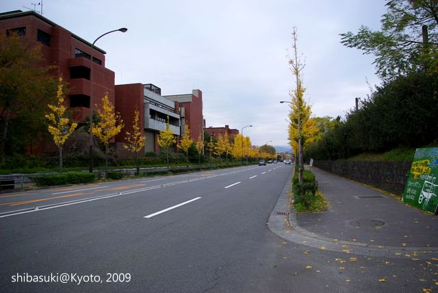 20091129_Kyoto-184_京大 東大路通_1.JPG