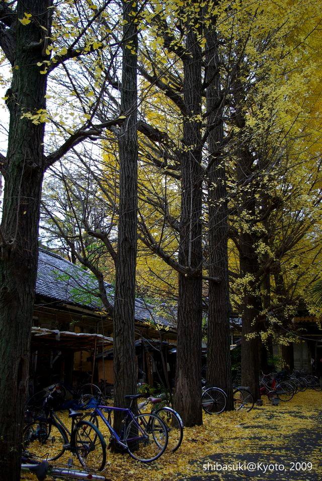 20091129_Kyoto-216_京大吉田寮_1.JPG