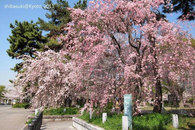 20110414_Kyoto-3_平安神宮前_1.JPG