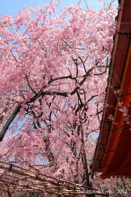 20110414_Kyoto-46_平安神宮 神苑_1.JPG
