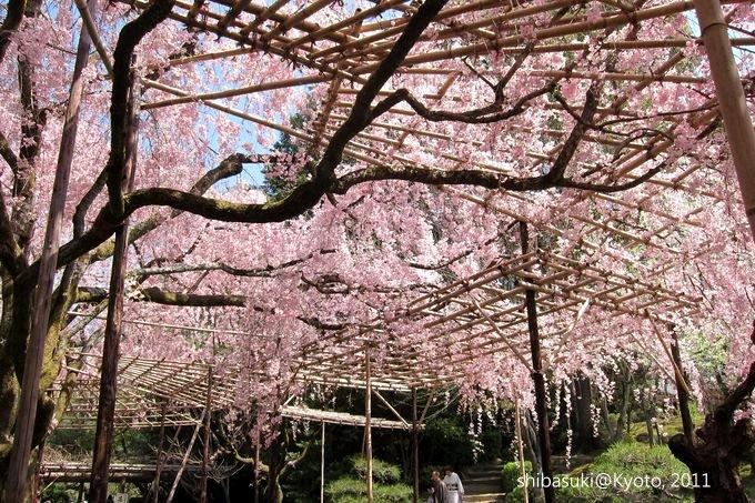 20110414_Kyoto-57_平安神宮 神苑_1.JPG