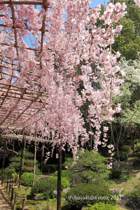 20110414_Kyoto-59_平安神宮 神苑_1.JPG