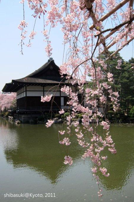 20110414_Kyoto-76_平安神宮 神苑_1.JPG