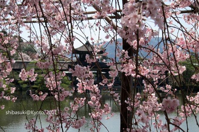 20110414_Kyoto-83_平安神宮 神苑_1.JPG
