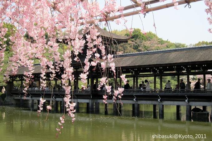 20110414_Kyoto-127_平安神宮 神苑_1.JPG