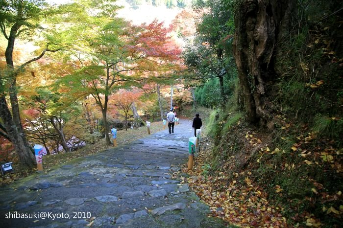 20101116_Kyoto-9_高雄_1.JPG