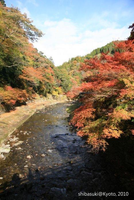 20101116_Kyoto-24_高雄神護寺_1.JPG