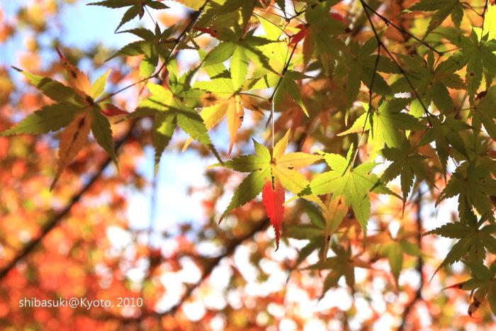 20101116_Kyoto-36_高雄神護寺_1.jpg