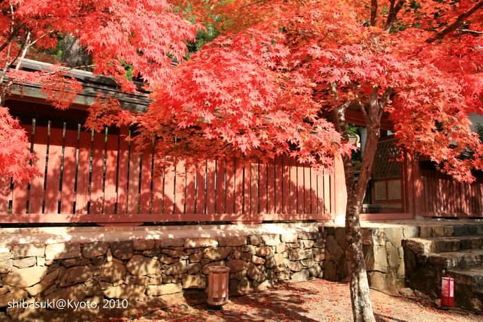 20101116_Kyoto-100_高雄神護寺_1.JPG